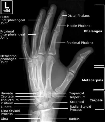 hand oblique details